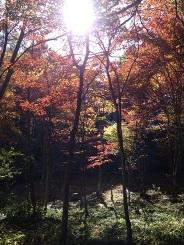 軽井沢の紅葉はとっても綺麗です